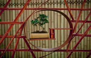 Bonsai in a Bamboo Screen