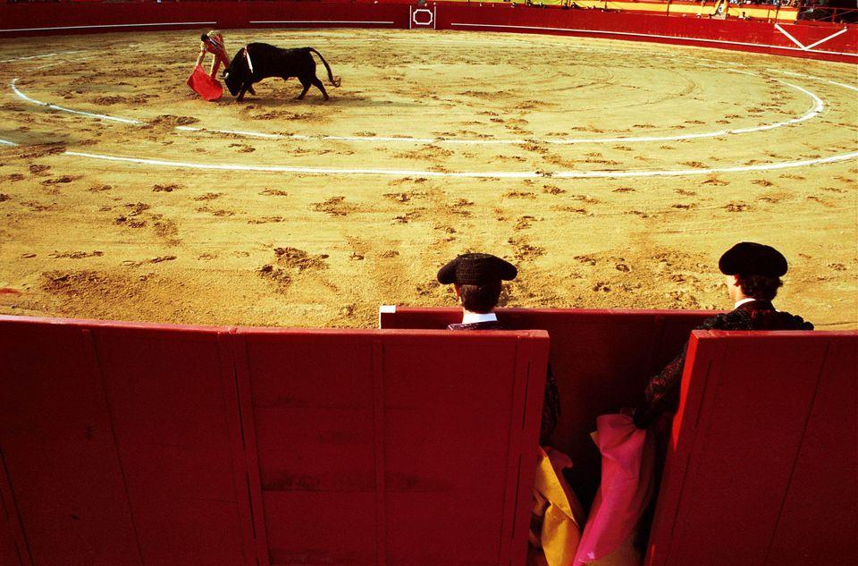 Bull Fight in the arena of Valdemorillo ( Madrid)