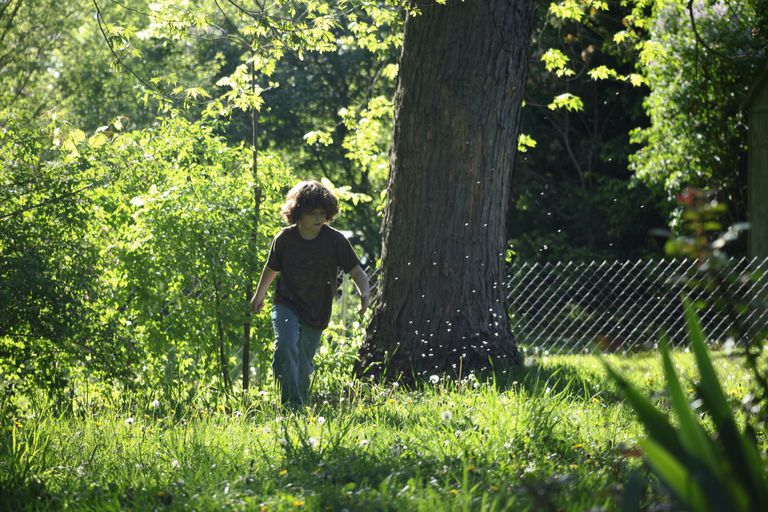 Boy outdoors on sunny day