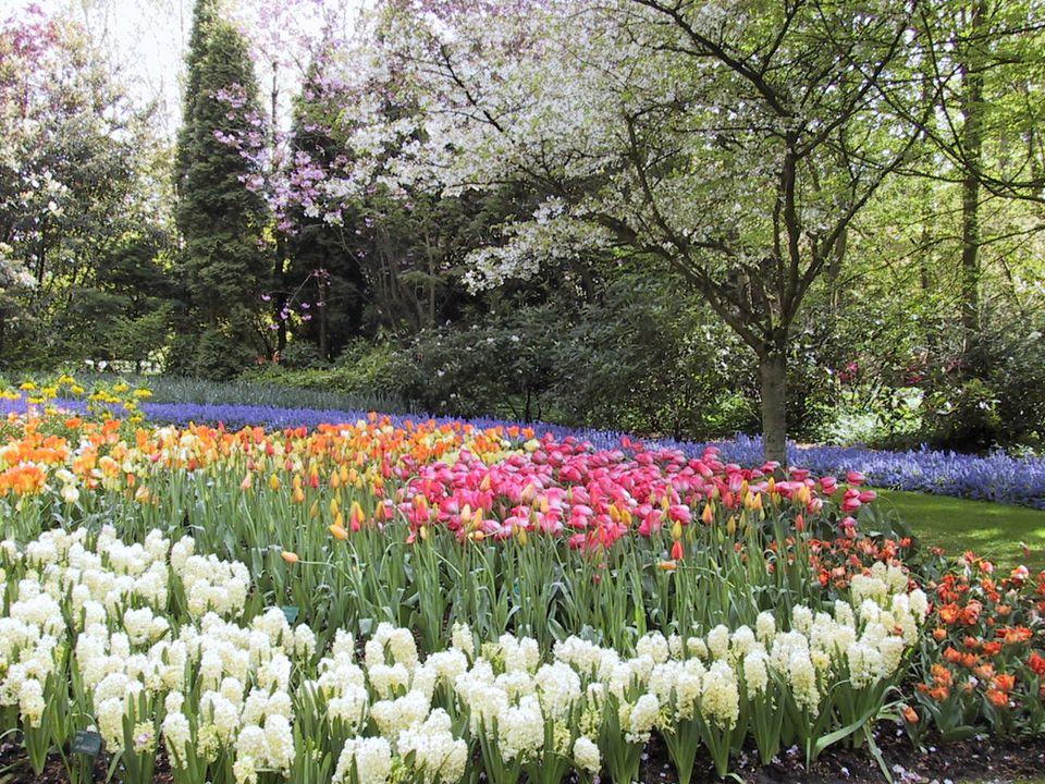 Keukenhof Gardens in the Netherlands - Spring Flowers