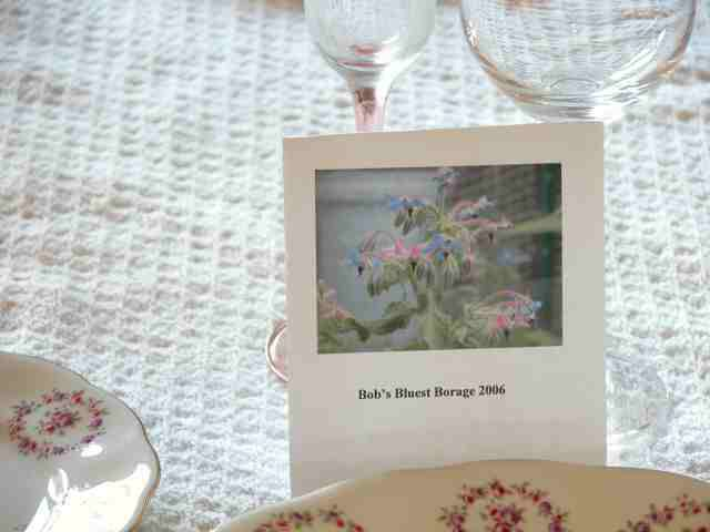 Homemade Seed Packets - Giving Seed Saved from Your Garden as Gifts.