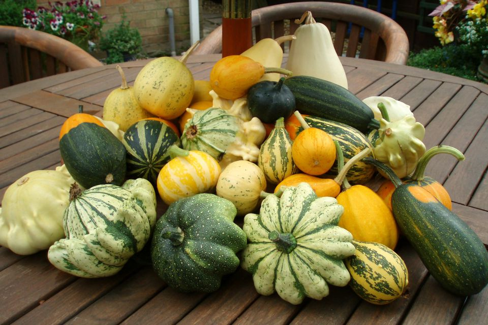 gourds on patio table