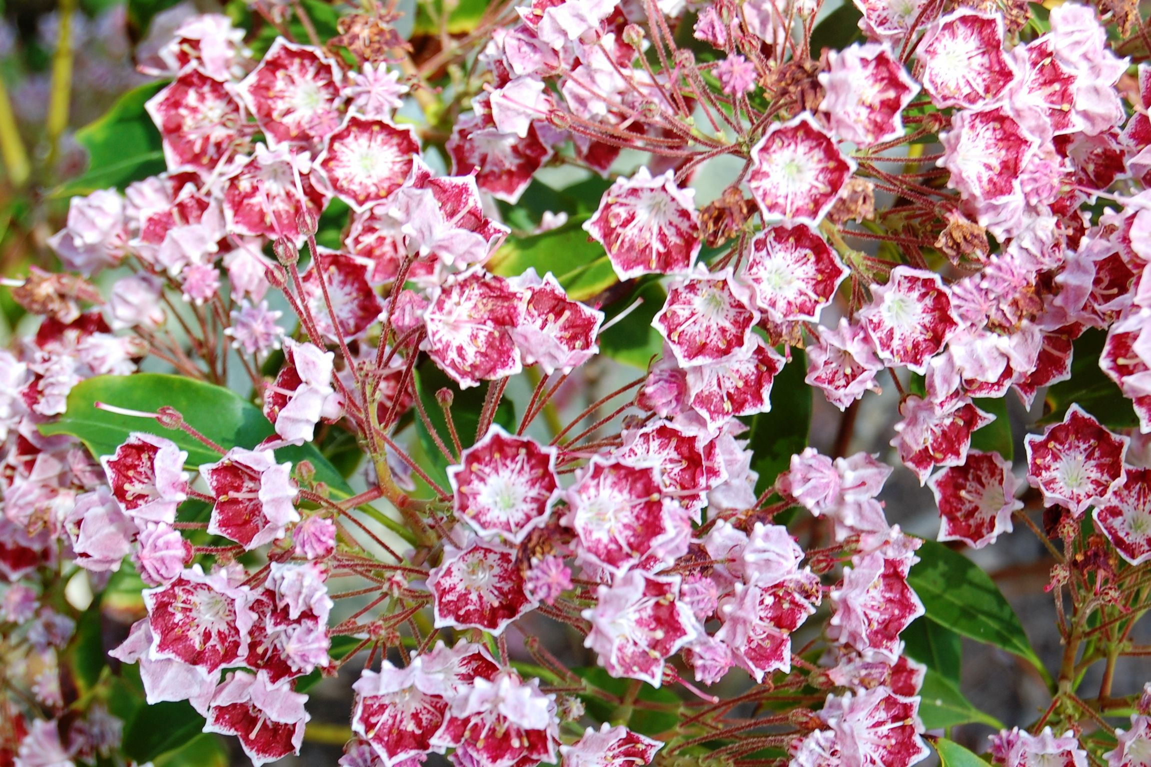 Pictures of flowering shrubs for landscaping ideas dhlflorist Choice Image