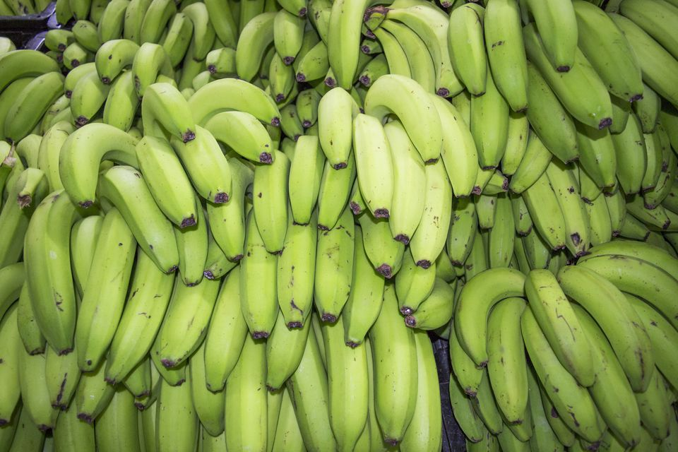 Bunches of Green Bananas
