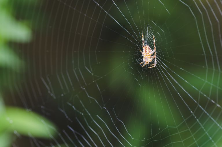 Image of a spider on a web