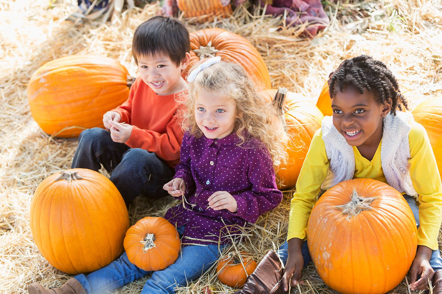 The Best Pumpkin Patches In Sonoma County For Picking