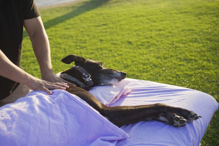 Dog Getting a Massage