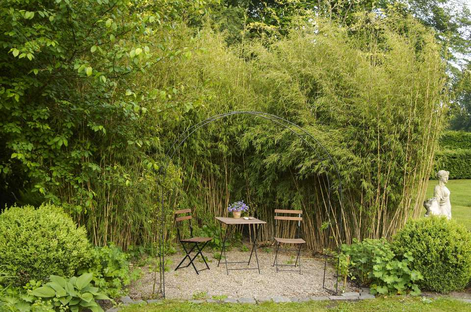 Best ornamental grasses for privacy hardy clumping bamboo workwithnaturefo