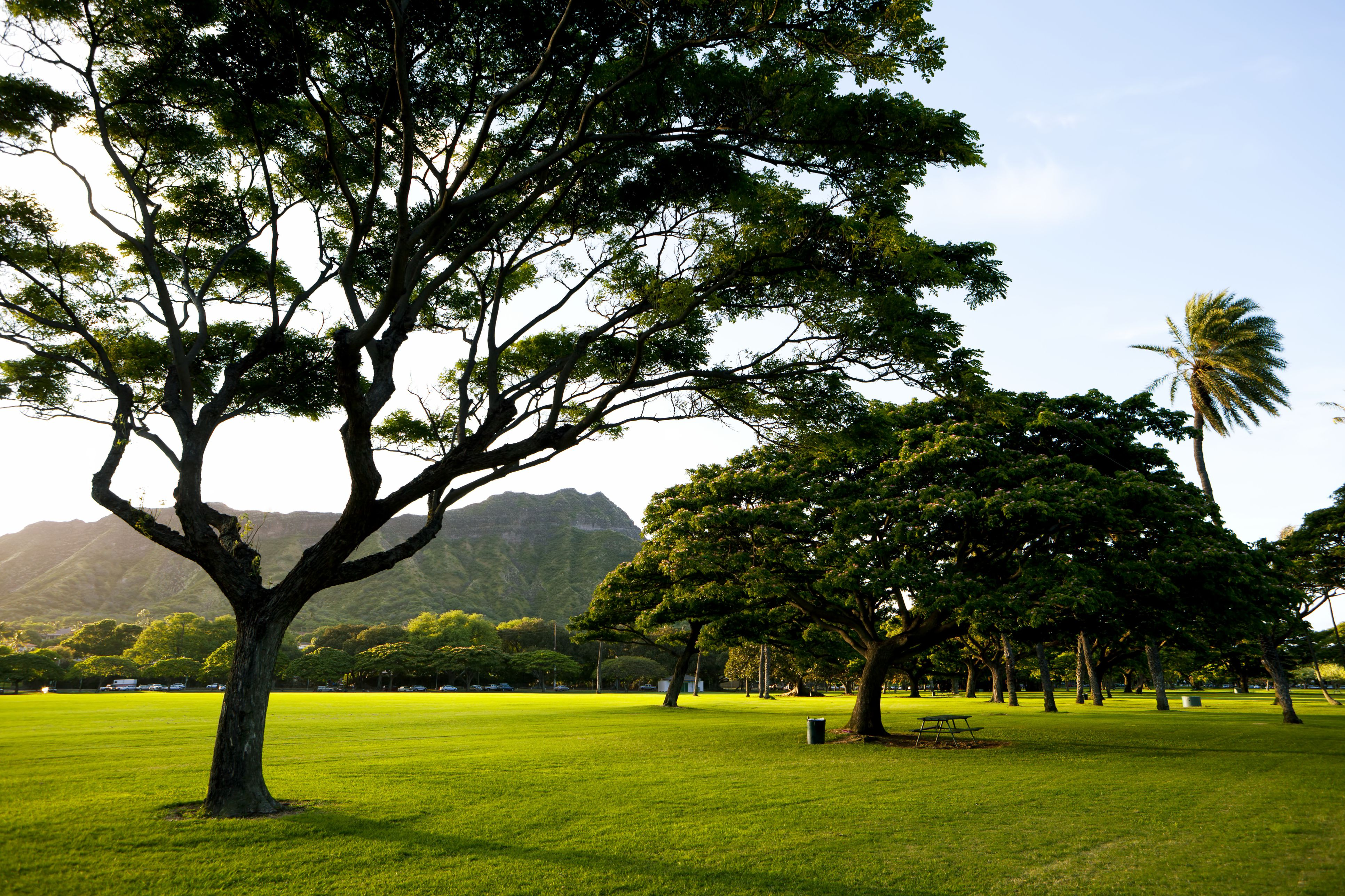 Free Things To Do In Waikiki Oahu Hawaii