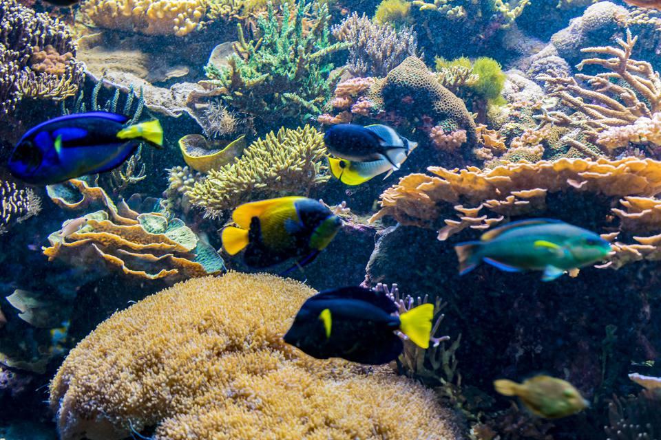 Scott Aquarium