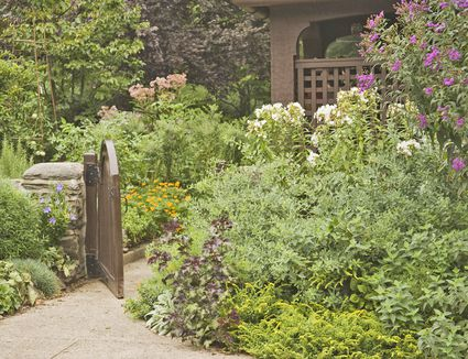 Design Elements for a Great Garden and Planting Basics