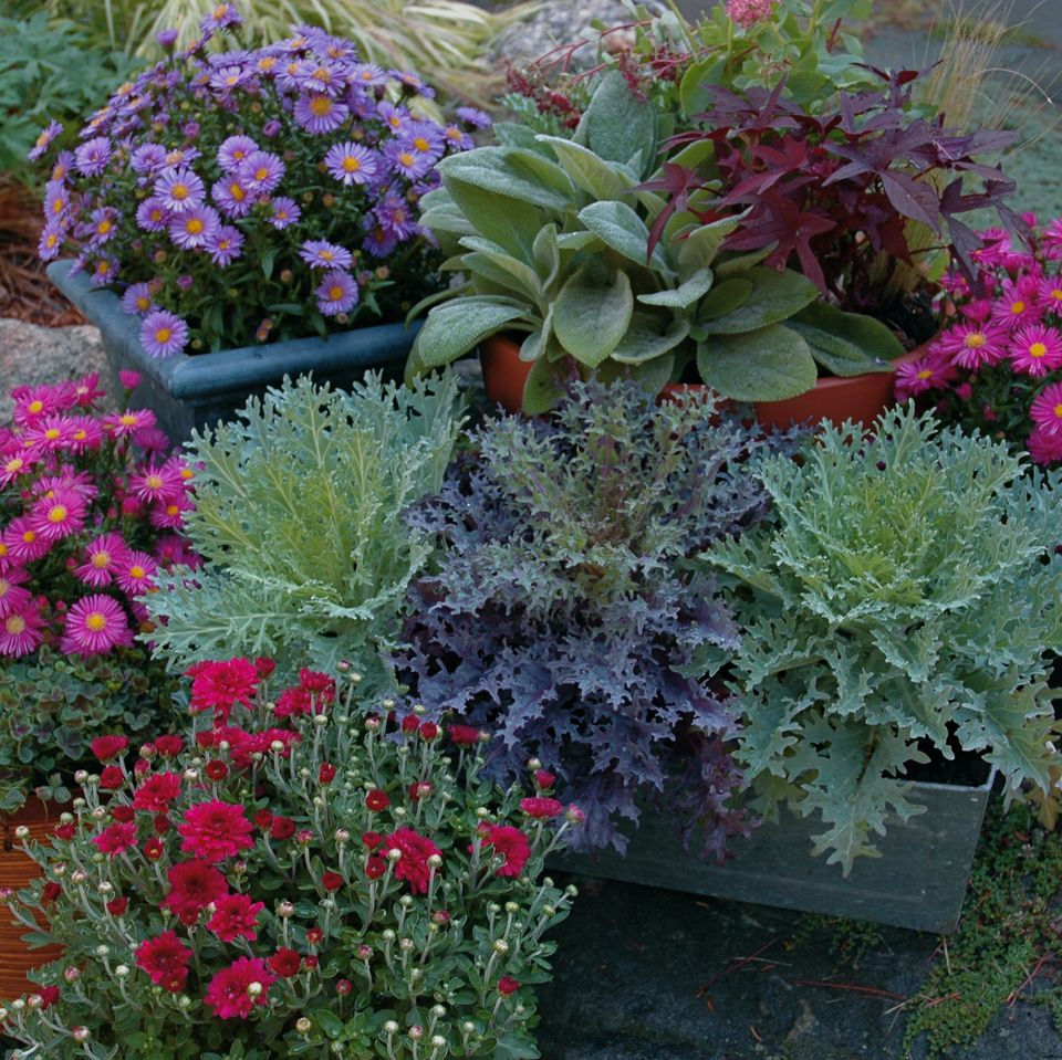 container garden picture of grouping of fall container gardens. 8 Tips for Fall and Winter Container Gardening