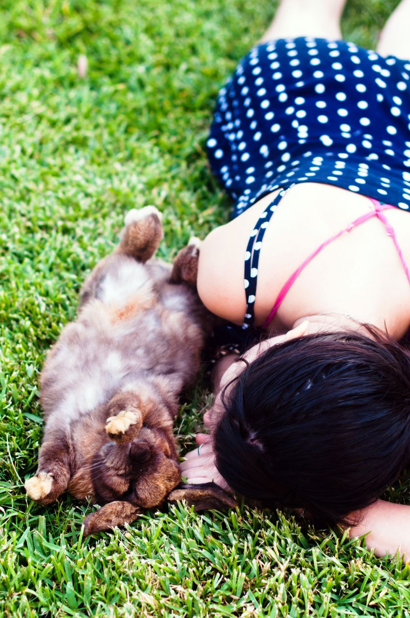 Rabbit lying on his back