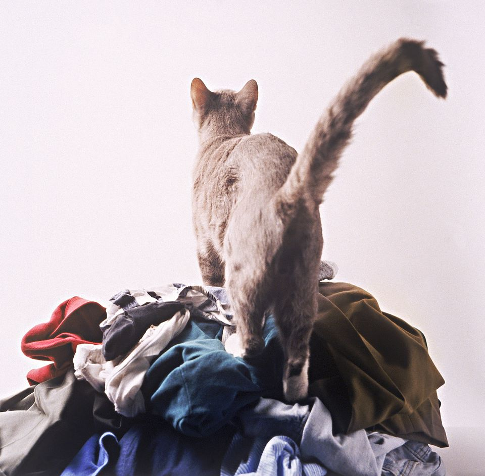 Cat urine on laundry