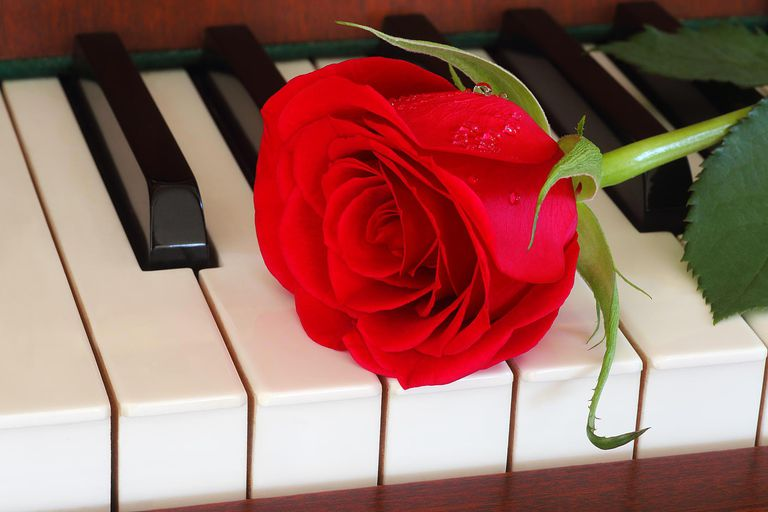 Red rose on piano keys as message of love