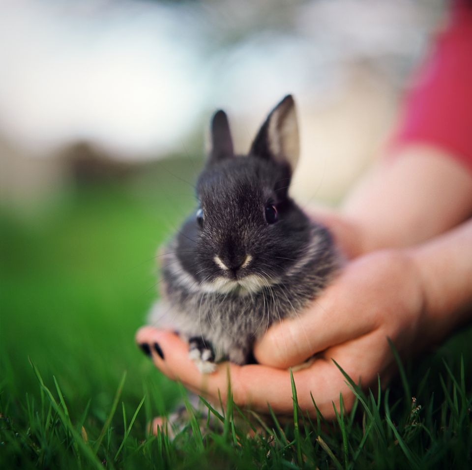 Person holding a young rabbit