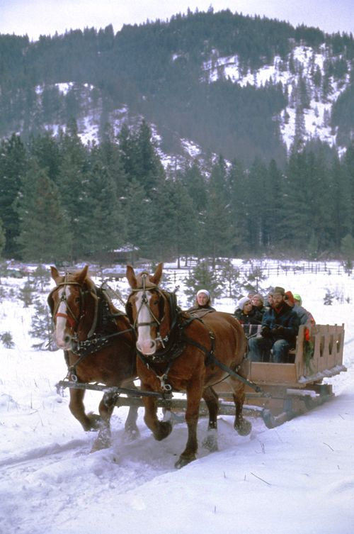 Horses Pulling Sleigh Full of People in Winter near Red Tail Canyon Farm (near Leavenworth)