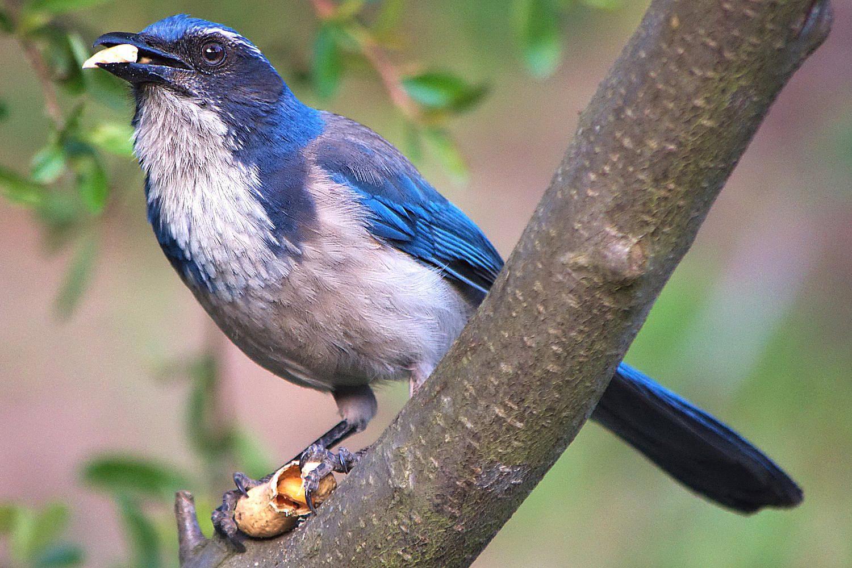 omnivorous definition omnivore bird diets