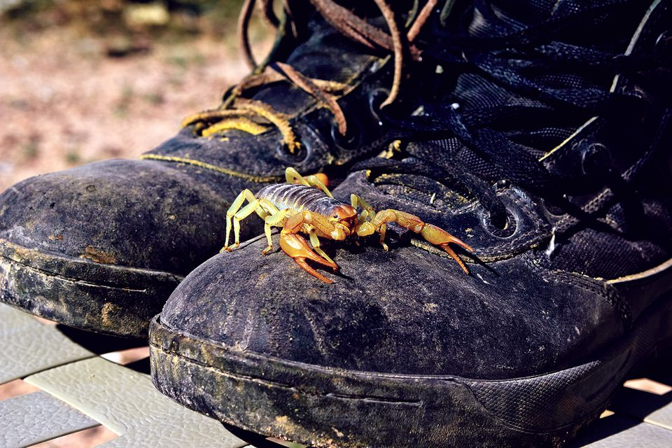 Scorpion on boots