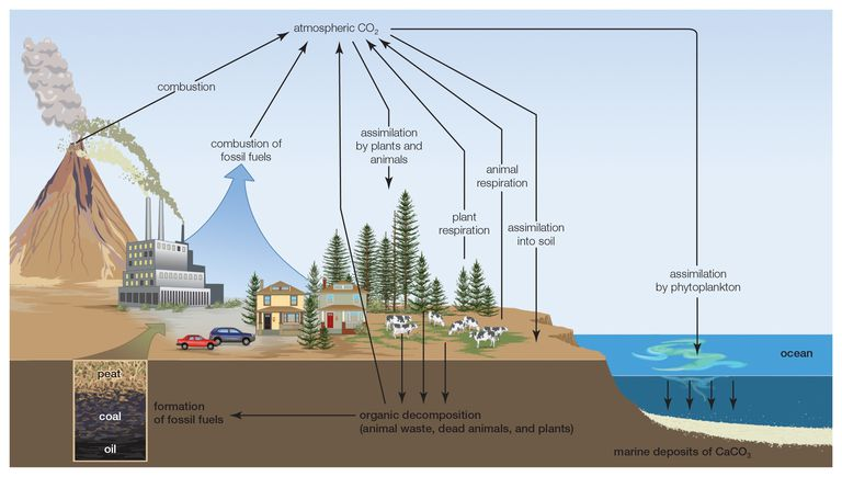 Nutrient Cycles in the Environment
