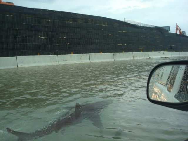 Picture of a Shark Swimming in Flooded Puerto Rico Street