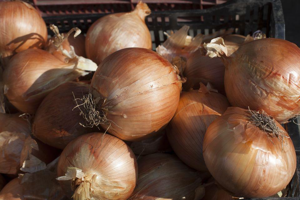 Sweet vidalia onion