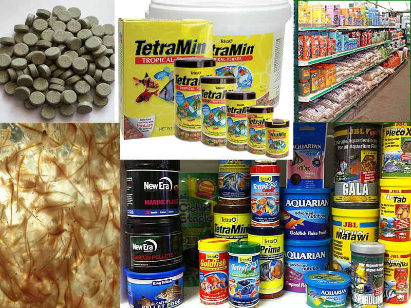 The best fish food for tropical fish for Best fish food