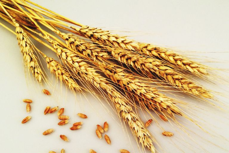 A close-up view of wheat.