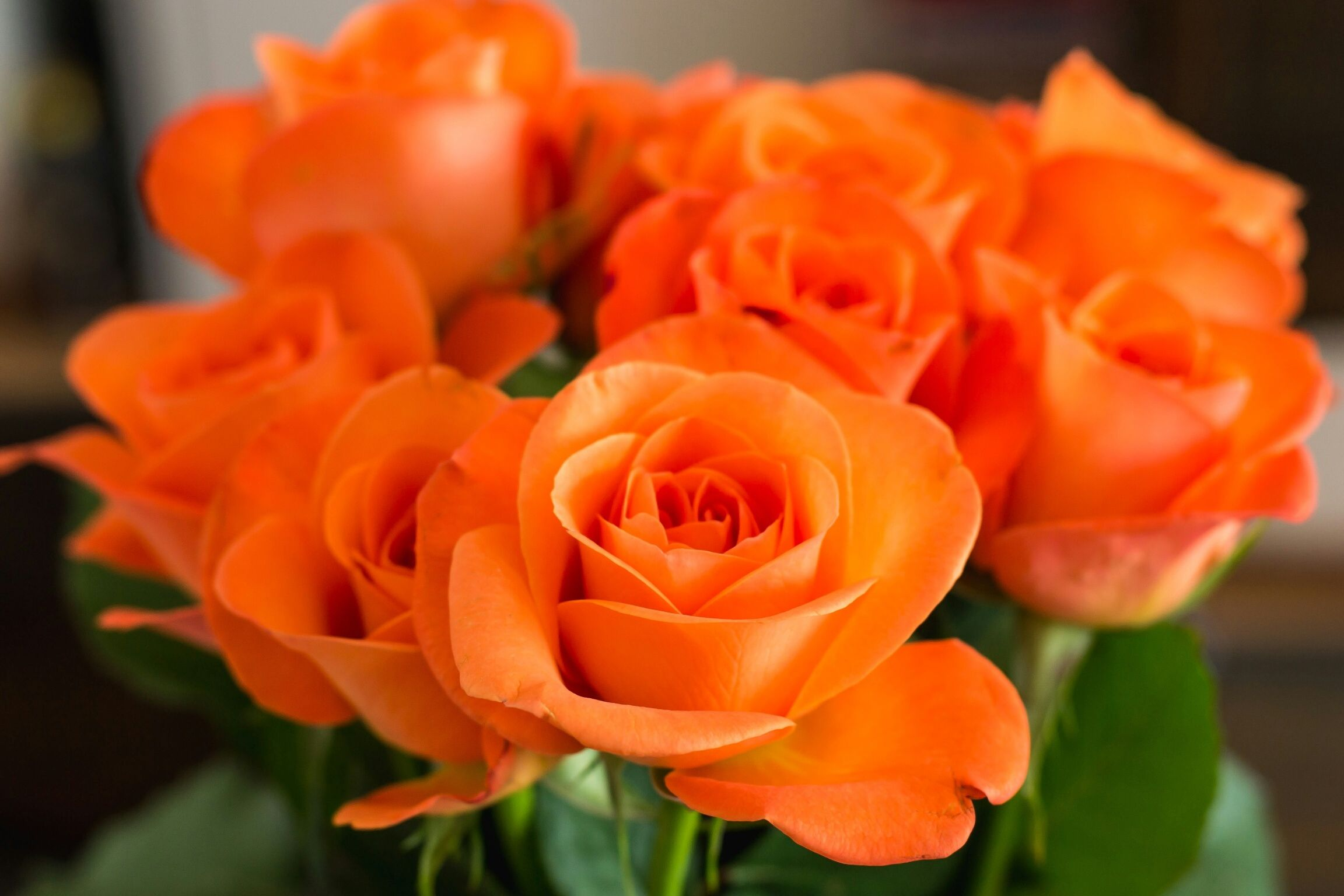 Types Of Roses Pictures Presenting A Variety Colors