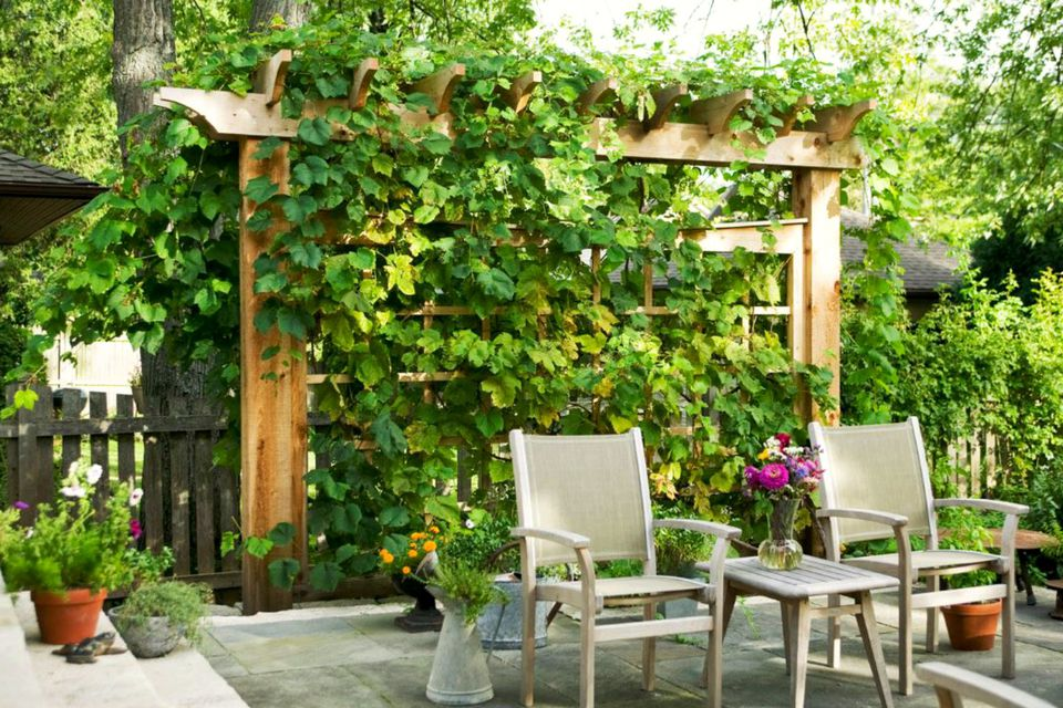 Vertical Gardens - Plants for Walls and Privacy Screens