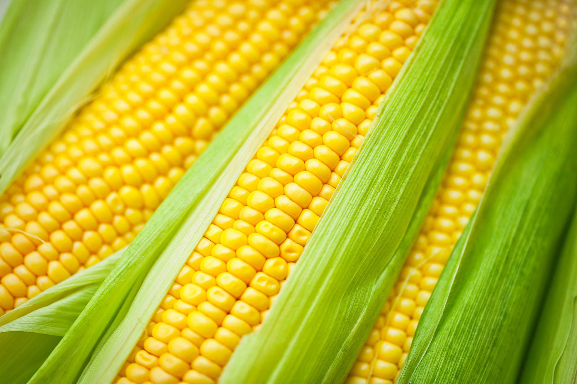 Image result for corn on the cob