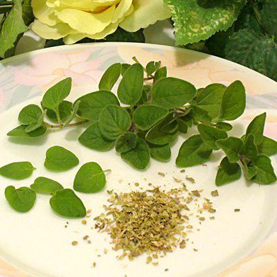 oregano, herb, substitute, recipes, marjoram, receipts
