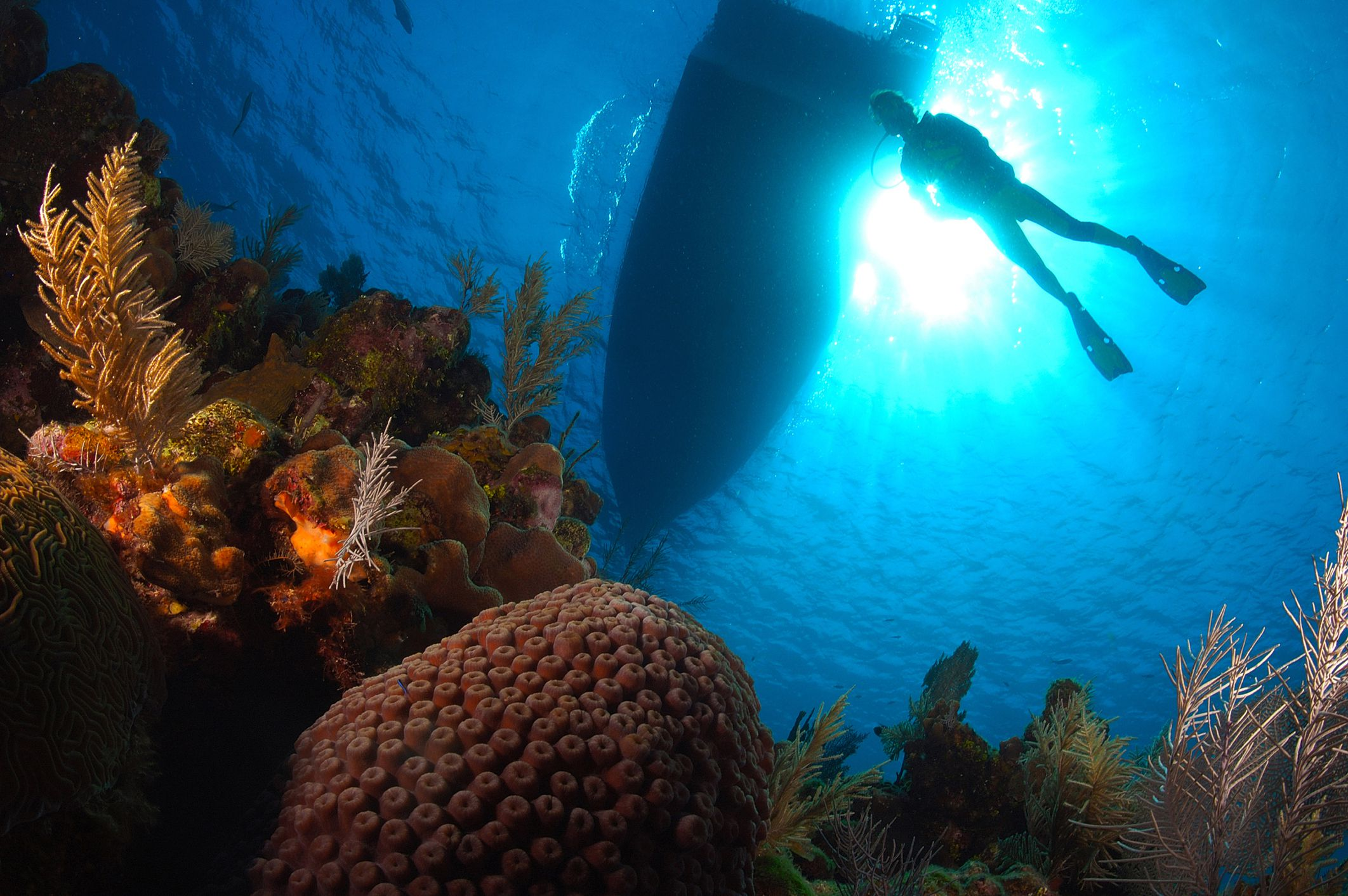 The worlds cheapest places to get scuba certified 1betcityfo Choice Image