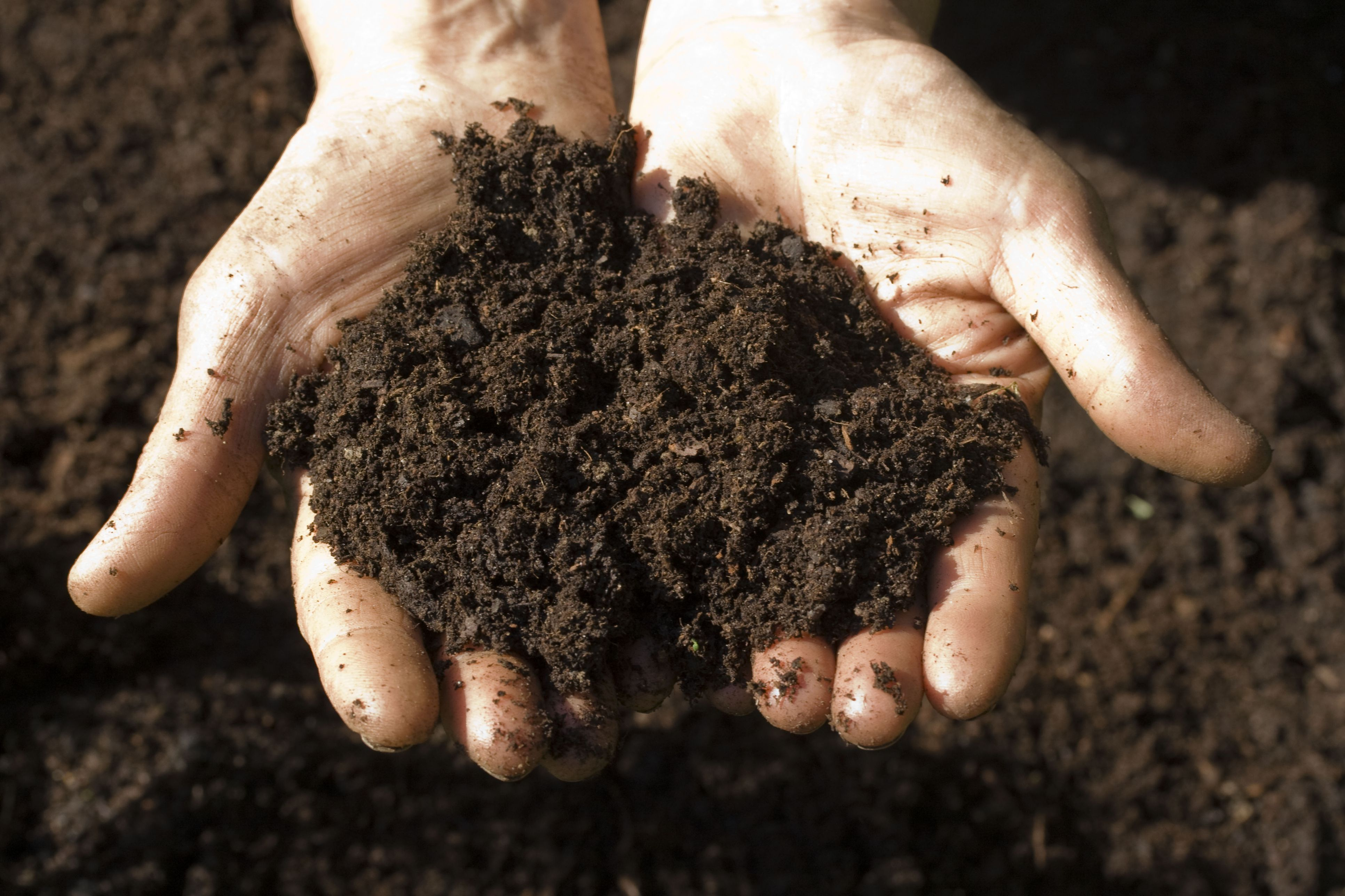 Four simple do it yourself soil tests for Soil yourself