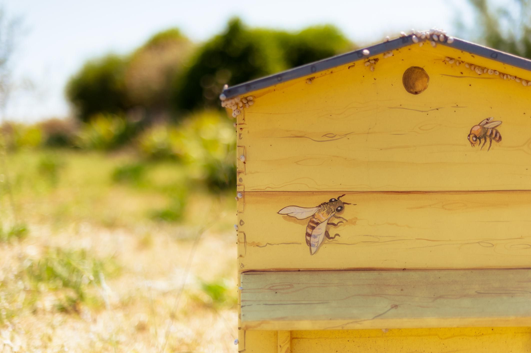 Supplies For Beekeeping Beginners