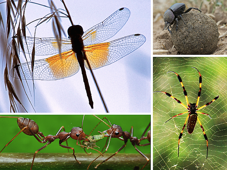 Collage of Insect Photos