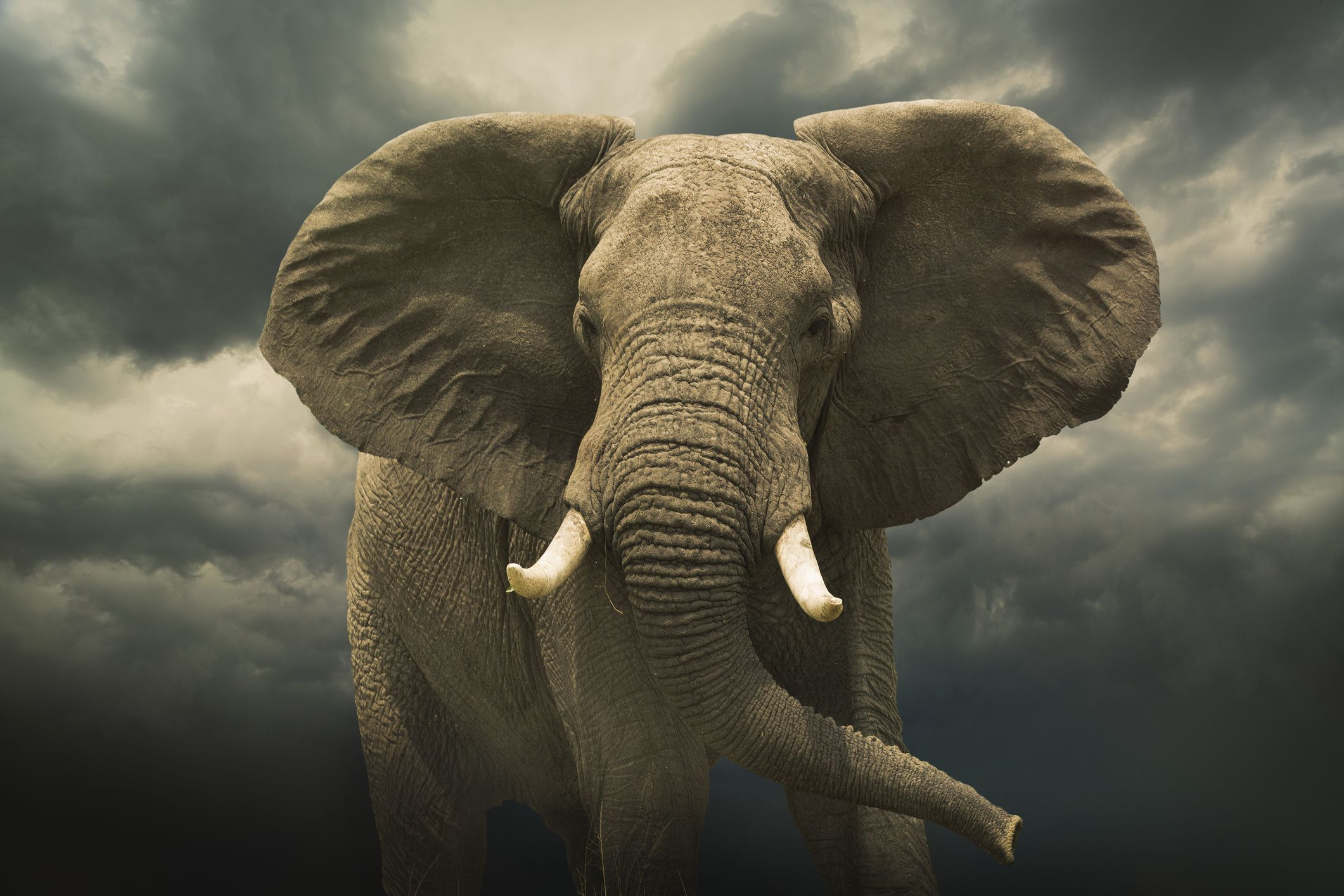 10 facts about elephants