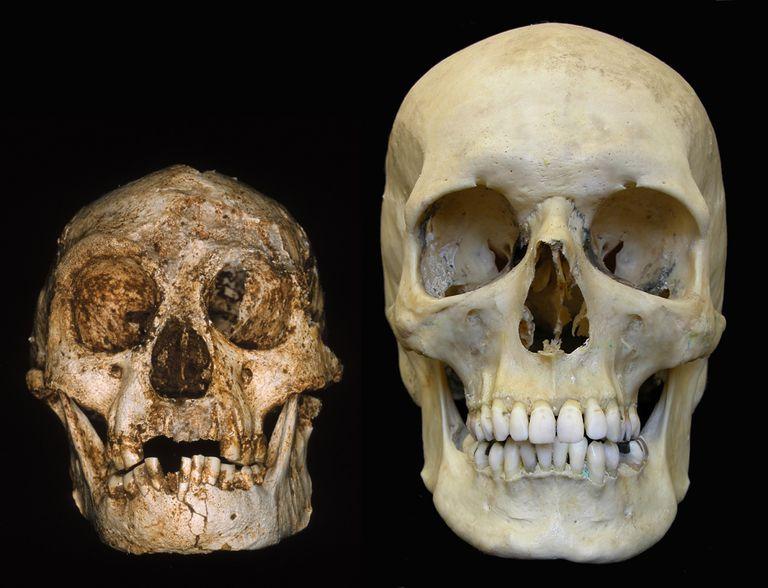 Homo floresiensis (Liang Bua Cave, Indonesia) and a modern human skull