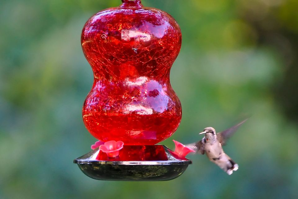 glass buy feeders decorative copper sale hummingbird for feeder