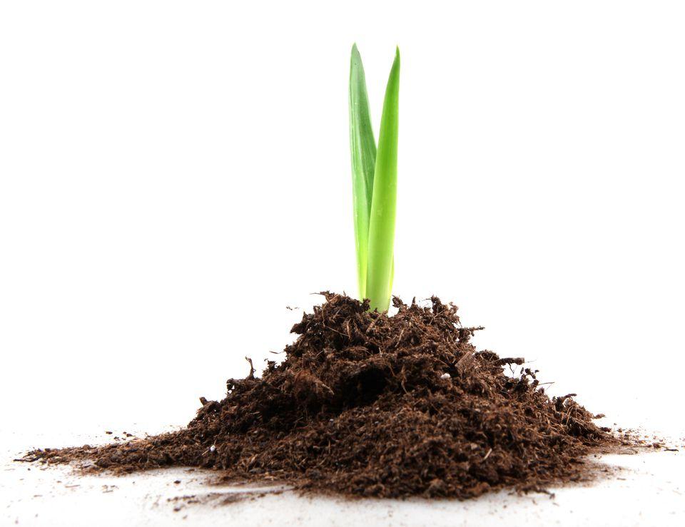 feng shui wealth vase soil