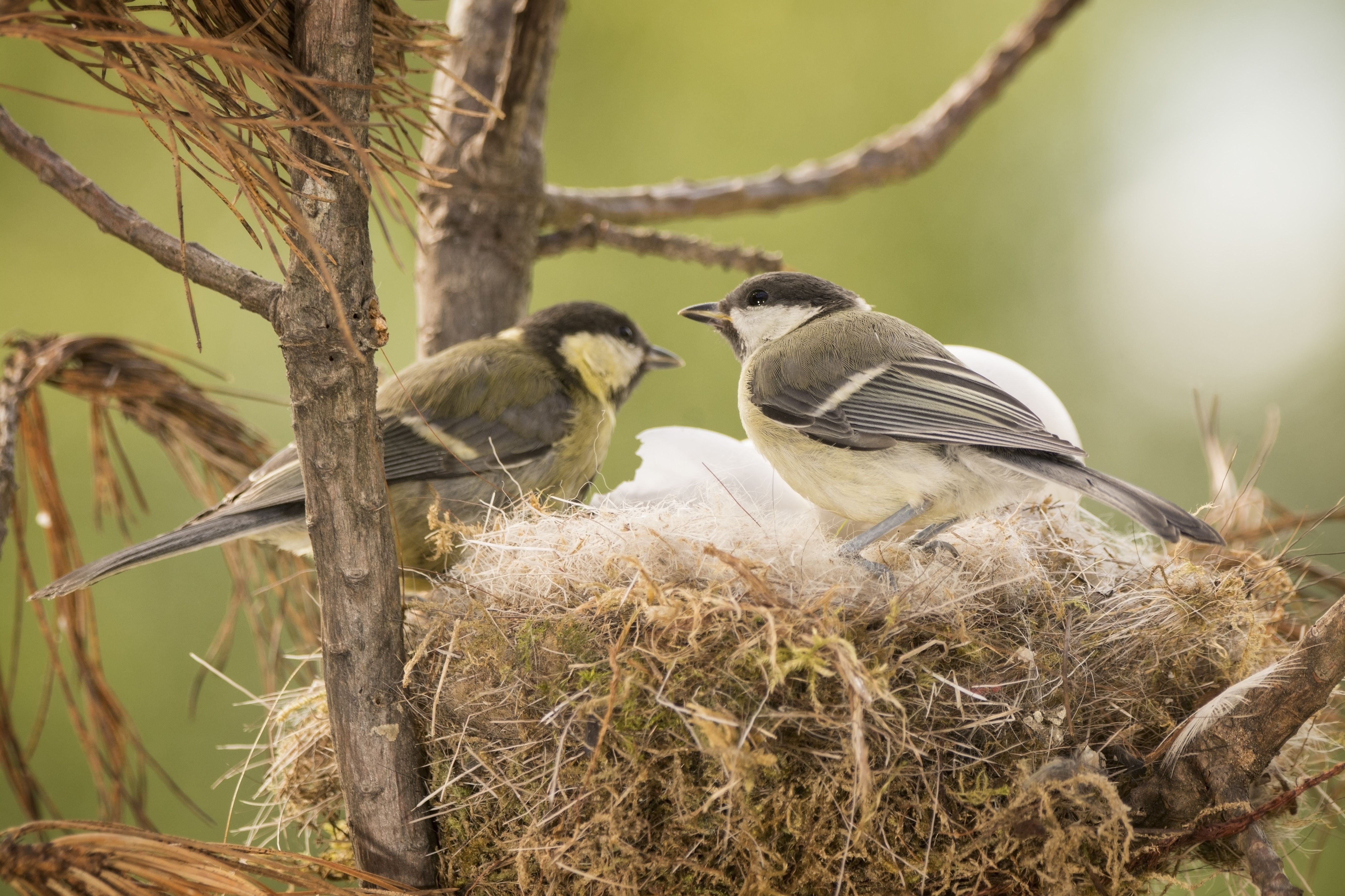 Bird Nest Identification Bird Nest With Bird
