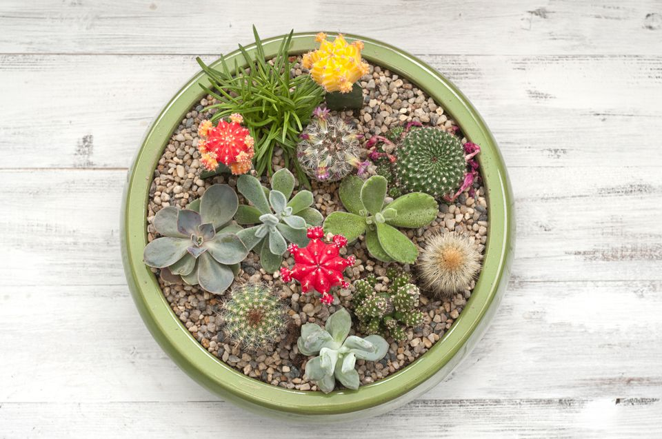 Making a simple succulent container garden succulent garden workwithnaturefo