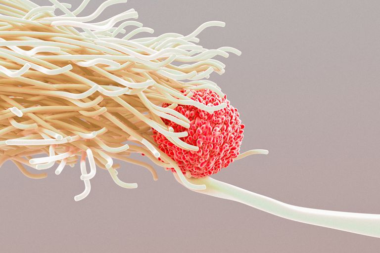 Dendritic Cell and Lymphocyte