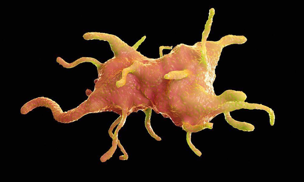 illustration of amoeba