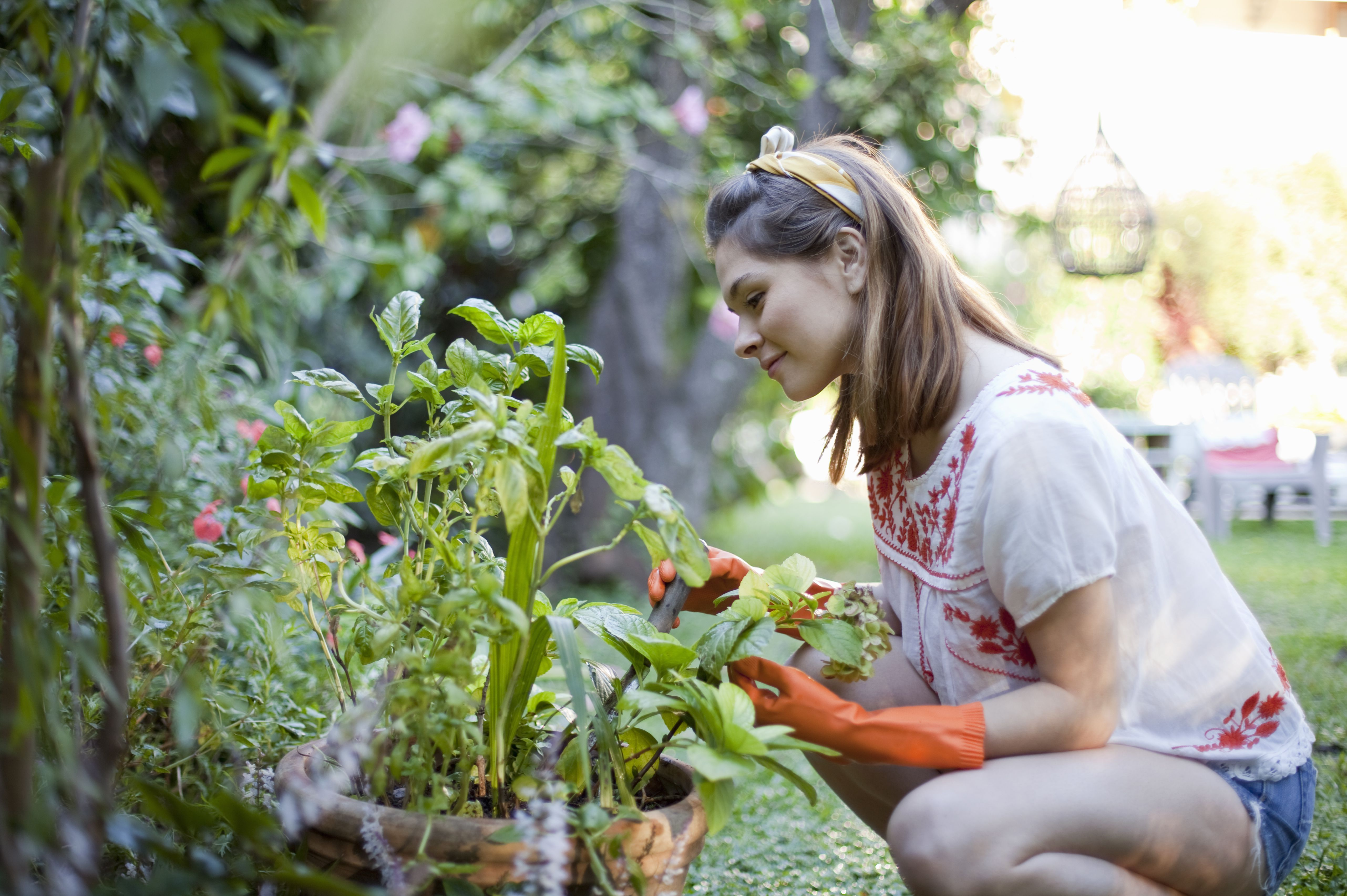 Garden Design Qualifications landscaping and garden skills for resumes and websites