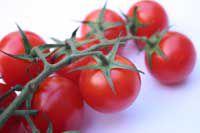 Vine-Ripe Tomatoes - Tomates