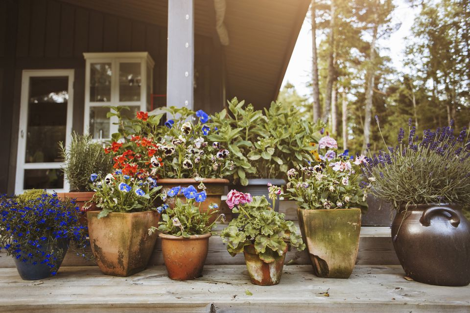 5 things to know for successful container gardening for Easy to care for flowers outdoor