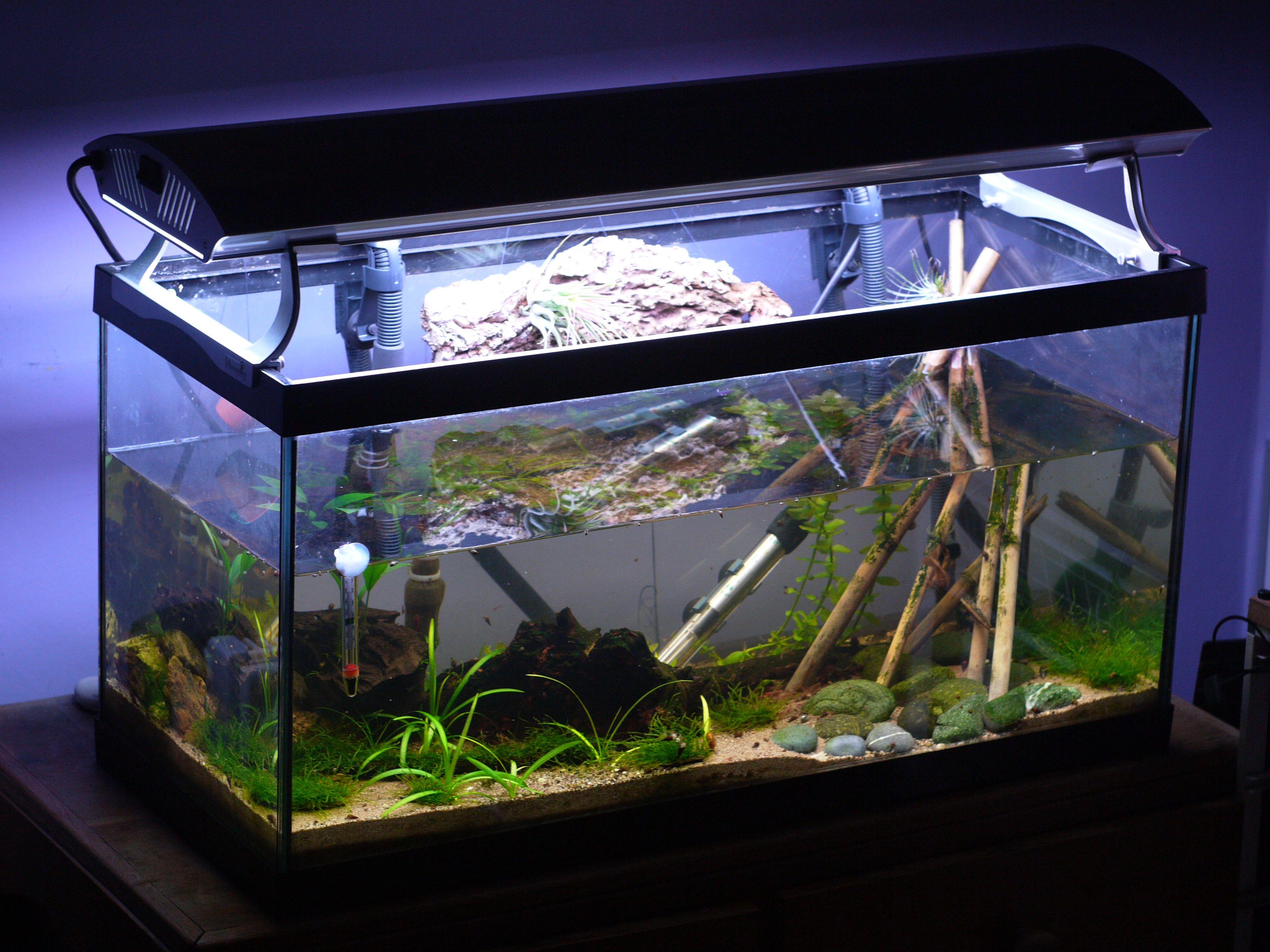 Aquarium Thermometer Pros and Cons