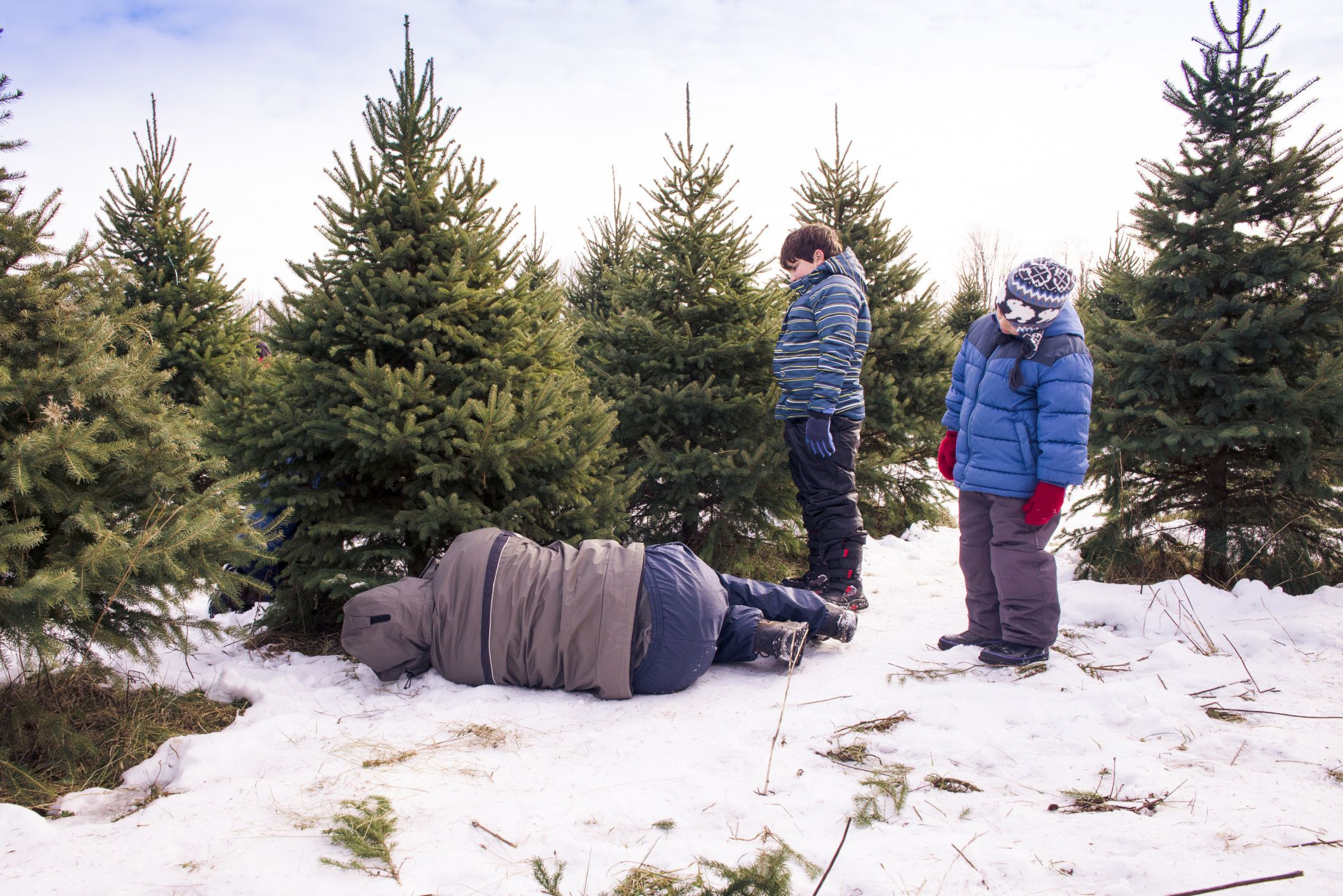 15 Places To Cut Your Own Christmas Tree In Minnesota - Christmas Trees To Cut Down