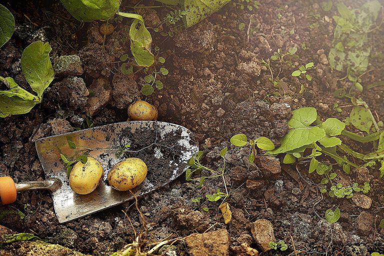 Potatoes dug from the dirt symbolize the subsistence style of agriculture common to horticultural societies.